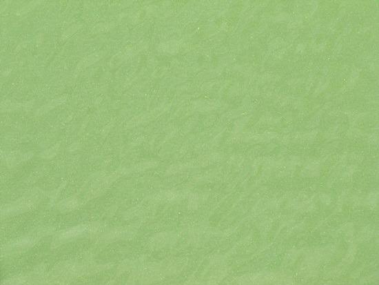 낙동강 녹조 북상 중5