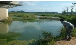 녹조로 뒤덮혀 썩어가는 남도의 젖줄 영산강7