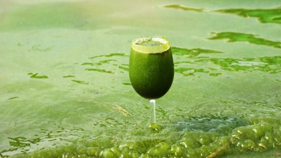 삽질 당한 4대강, 22조원 퍼부어 생태계 파괴 1