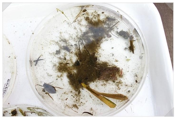 [성남] 청소년 수서곤충모니터링단, 탄천습지생태원의 생물들8