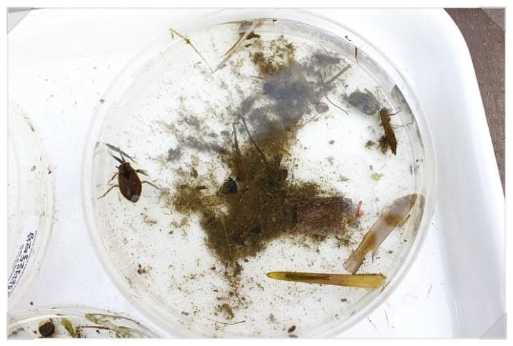 [성남] 청소년 수서곤충모니터링단, 탄천습지생태원의 생물들9