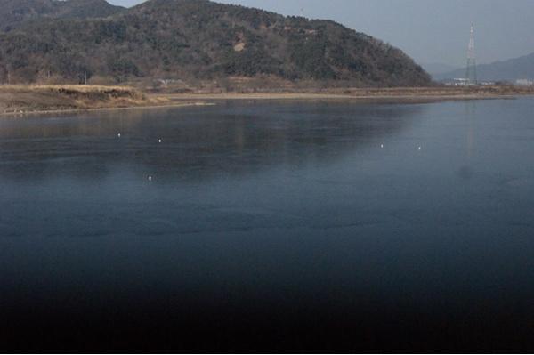 철새가 사라진 철새도래지 낙동강 해평습지2