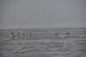 파주서명 임진강을 습지보호구역으로 지정하라1