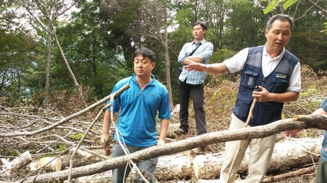 평창동계올림픽 예정지, 가리왕산 불법 벌목 현장 5