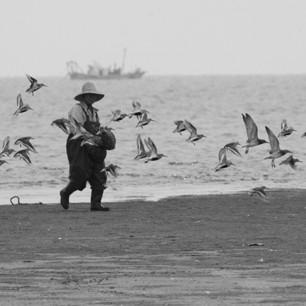 새만금 갯벌