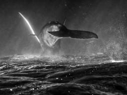 고래를 잡아먹는 미친 짓에 대한 단상