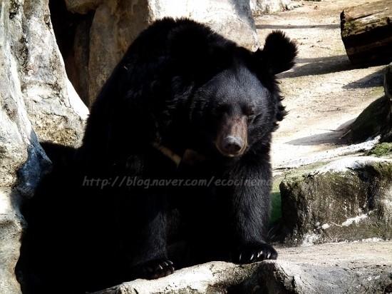 ▲ 소음은 야생동물에게 치명적이다. 동면 중인 대형 동물은 '야호'소리에 놀라 동면 장소를 옮기는데, 제 때 찾지 못하면 죽을 수도 있다. ⓒ이철재