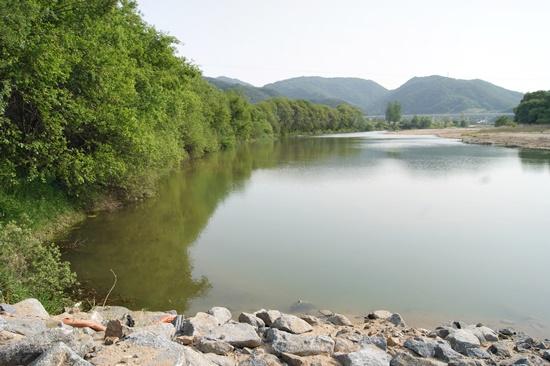 2014년 4월 하천공사 전의 내성천. 우안으로 왕버들숲이 잘 발달해 있다. Ⓒ 정수근