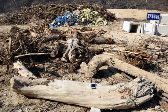 자연제방 구실을 해주던 아름드리 왕버들숲은 베어져 폐기물로 버려졌다.Ⓒ 정수근