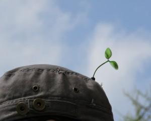 """2016.4.17 지구의 날 기념 """"지구를 위한 나무"""", 대학로 마로니에공원 Ⓒ환경운동연합"""