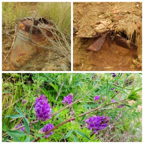 농섬에 박힌 포탄. 농섬은 죽음의 땅이었다. 환경정화작업을 했고 계속적으로 예정되어 있지만, 54년간 받아낸 포탄은 아직도 곳곳에 박혀 있었다. 풀과 꽃이 자라고 물새가 번식함으로 이젠 생명을 품은 땅이 되었다. 사진의 꽃은 농섬에 피어난 자주개자리꽃.ⓒ 정한철