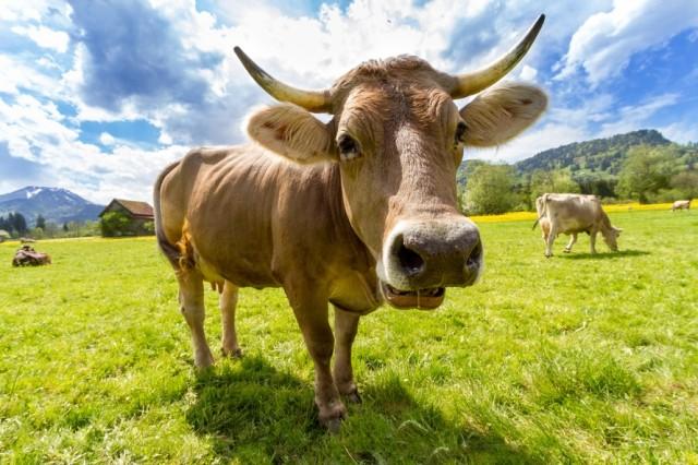 스위스 생태적 농업