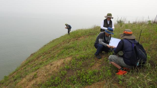 검은머리물떼새 알 발견 야생조류교육센터 그린새 서정화 대표가 화성환경운동연합 활동가와 함께 농섬에서 발견한 검은머리물떼새 알의 크기를 재고 있다. ⓒ 정한철