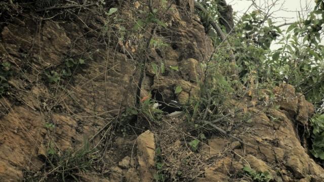 검은머리물떼새는 포란 중 농섬과 이어진 웃섬에서 검은머리물떼새가 알을 품고 있다.ⓒ 정한철