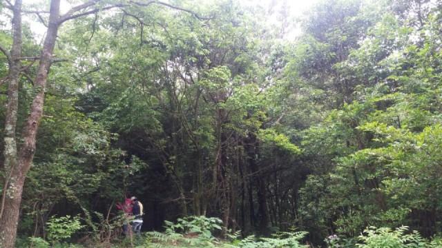▲ 사업부지. 제주사파리월드 사업예정지. 상록활엽수림이 풍부한 선흘곶자왈의 일부이다.ⓒ제주환경운동연합