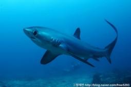 [모금성공!] 멸종위기의 상어를 구해주세요!