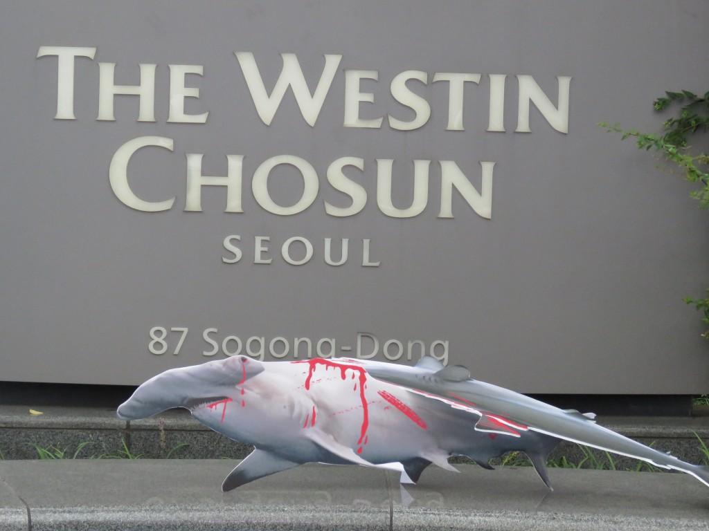9월8일 환경운동연합은 서울 소공동 웨스틴조선호텔 앞에서 '왕후의 식탁 야만의 식탐' 샥스핀요리 판매중단 캠페인'을 펼쳤다. ⓒ환경운동연합