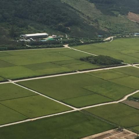 경작지 정리가 잘 이루어진 봉하마을 논의 모습