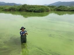 [현장기고] 4대강 피해, 썩은 강줄기 따라 물고기만 떼죽음당하는 게 아니었다