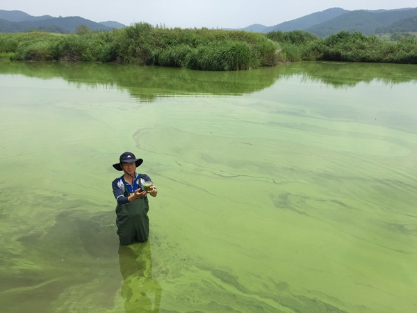 낙동강을 뒤덮은 녹조라떼.2012년부터 매년 심각한 녹조현상이 반복되고 있다.ⓒ대구환경운동연합