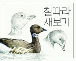 [모집]<철따라 새보기>두 번째 여행-김재환 화가와 겨울철새 그리기