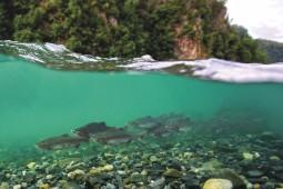 [처음 만난 한강, 한강술래1] 영화 '댐 네이션 : 댐이 사라지면'을 보고