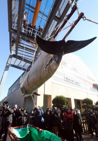 지난 9일 오후 울산시 남구 장생포 고래생태체험관 앞에서 돌고래가 고래생태체험관 2층 수족관으로 끌어올려지고 있다. 고래생태체험관은 일본에서 수입한 돌고래 2마리를 이날 부산항에서 울산으로 옮겨왔다. 울산/연합뉴스