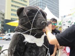 [생태보전] 지리산 반달곰 죽이는 지리산 케이블카 포기하라