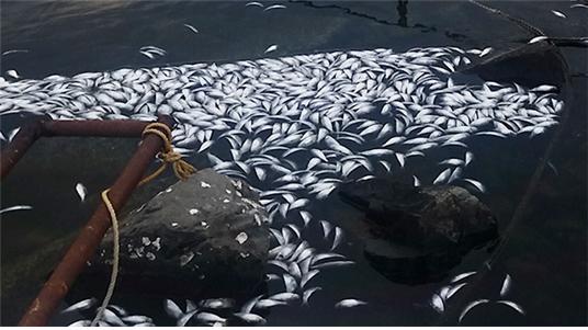 2017년 1월의 물고기 폐사 모습 (출처 : 전주 KBS)