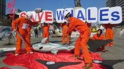 [생태보전] 생태학살자 울산 남구청, 돌고래 수입해서 또 죽였다