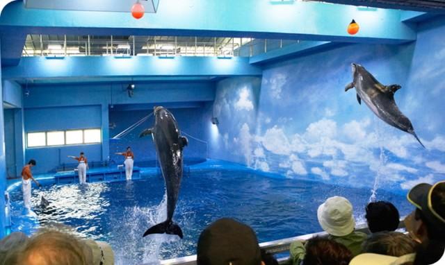 돌고래 쇼를 홍보하고 있는 돌고래생태체험관 홈페이지.