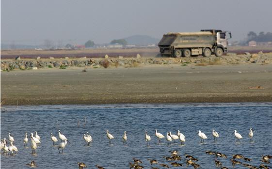 서식처 파괴로 한곳에 몰린 새들. ⓒ 오동필
