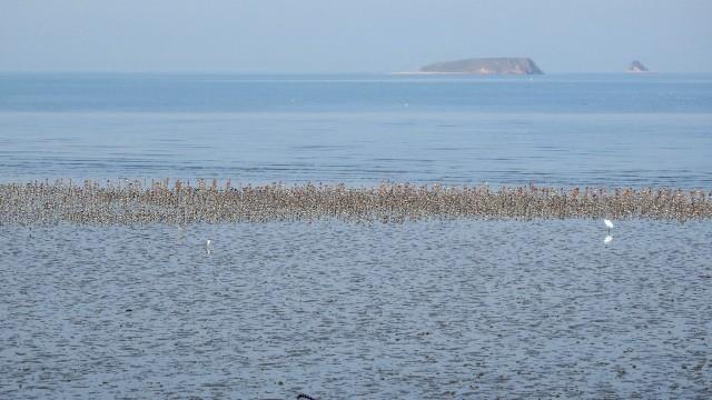 수원군공항이 들어오기로 발표된 곳은 생태적으로 매우 우수한 곳입니다. 경기만에서 가장 큰 규모의 갯벌이며 거의 유일하게 자연해안선이 살아 있죠. 저어새나 노랑부리백로 같은 멸종위기종.천연기념물이 사시사철 18종이 서식하고 봄가을 도요물떼새 2~3만 마리가 매일 먹고 자고 노는 곳입니다. 55년간 미군 폭격기의 해상 타깃으로 죽음의 땅이었던 매향리 농섬에, 천연기념물 검은머리물떼새가 번식하고 있음을 지난해 5월 확인했습니다. 갈매기와 흰뺨검둥오리가 번식하는 농섬.웃섬은 2~3년 내 저어새가 번식할 가능성이 큽니다. 전문가 진단입니다. 이렇게 하루하루 생명이 뿌리를 내리는 매향리에, 최전방 전투기지가 확장되어 강제로 이전함으로 파괴되는 것을 받아들일 수 없습니다. 생명은 존중받아야 합니다! 내 삶이 소중하듯 이웃도, 야생동물의 생명도 귀함을 알아 주십시오.ⓒ정한철