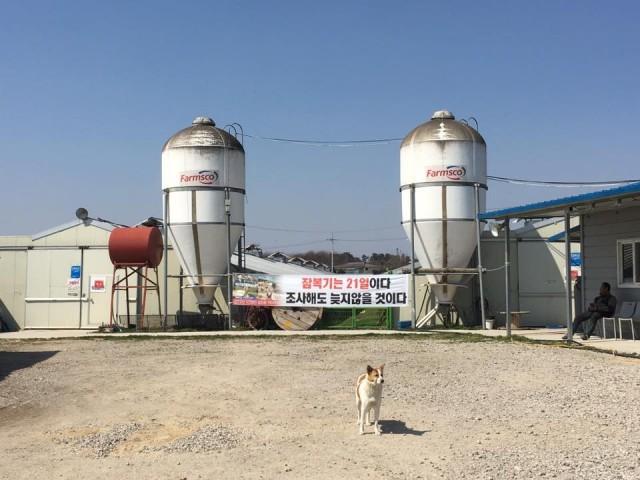 전북 익산시는 2월 27일과 3월5일, 망성면 하림 직영 육계농장에서 고병원성 조류독감(AI)이 발생하자, 반경 3km내 17개 농장에 '예방적' 살처분을 명령하고 닭 85만 마리를 살처분 했다. 일괄적으로 내려진 예방적 살처분 대상에는 동물복지인증을 받은 참사랑 농장도 5천마리도 포함됐다. ⓒ이정현
