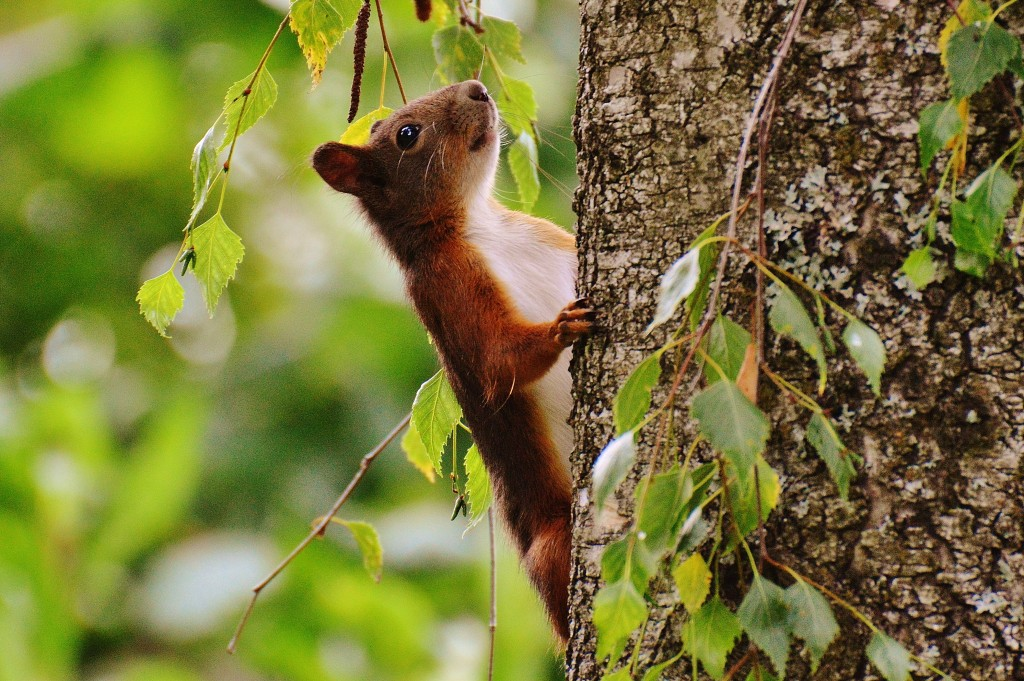 squirrel-nager-cute-nature-158358