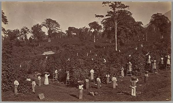 1875년 과테말라의 커피농장