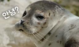 [카드뉴스] 5월 22일, 오늘은 '생물 다양성의 날'입니다!