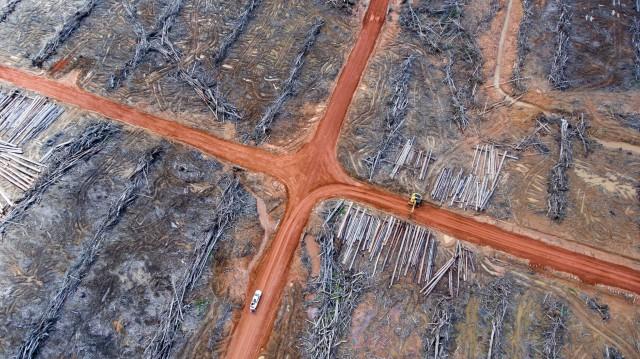 인도네시아 파푸아 지역에 위치한 코린도의 팜유 회사, PT Papua Agro Lestari ⓒMighty Earth