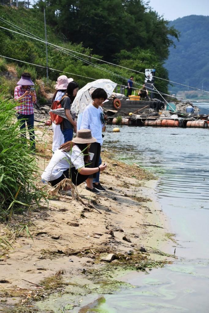 녹조가 짙게 핀 도동서원 앞 낙동강을 둘러보고 있는 행복학교 학생들 ⓒ 대구환경연합 정수근