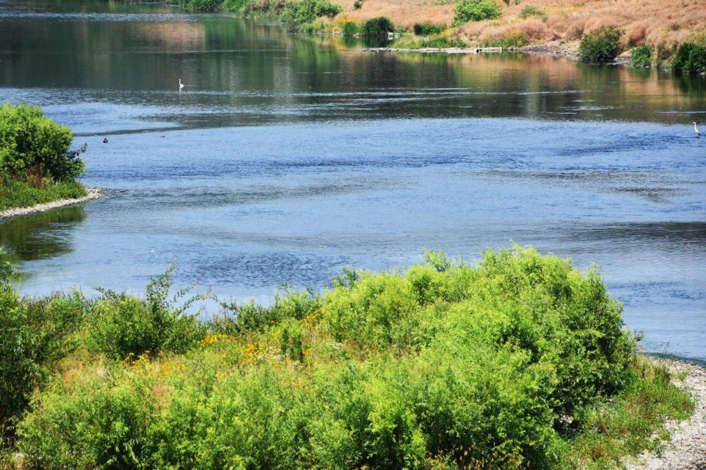 흐르는 금호강의 모습. 녹조가 전혀 발생하지 않았다. 강이 흐르기 때문이다. ⓒ 정수근