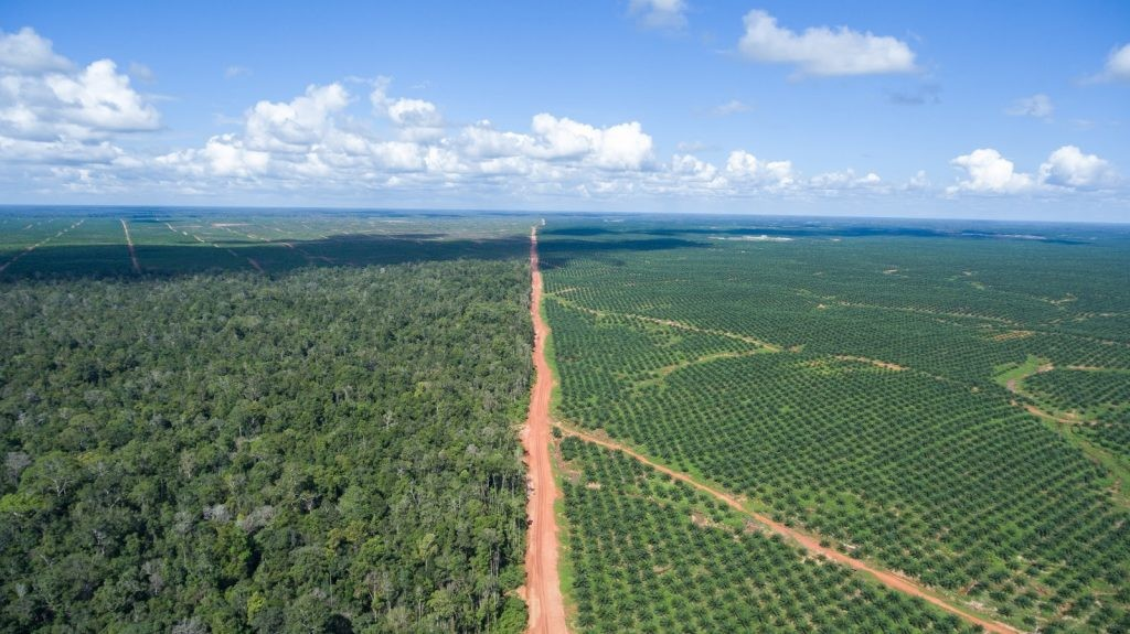 POSCO Daewoo's PT BIA palm oil concession. © Mighty; 5 June 2016.