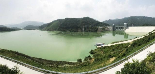 온통 초록이다. 녹조라떼 배양소가 된 영주댐. 이 물로 낙동강의 수질을 개선하겠다고? ⓒ 대구환경운동연합 정수근