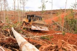 """프랑스, """"산림파괴로 만든 제품 수입 중단하겠다"""" 밝혀"""