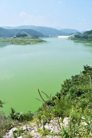 녹조라떼 배양소 영주댐은 가라, 대신 국립공원 내성천이여 오라! ⓒ 대구환경운동연합 정수근