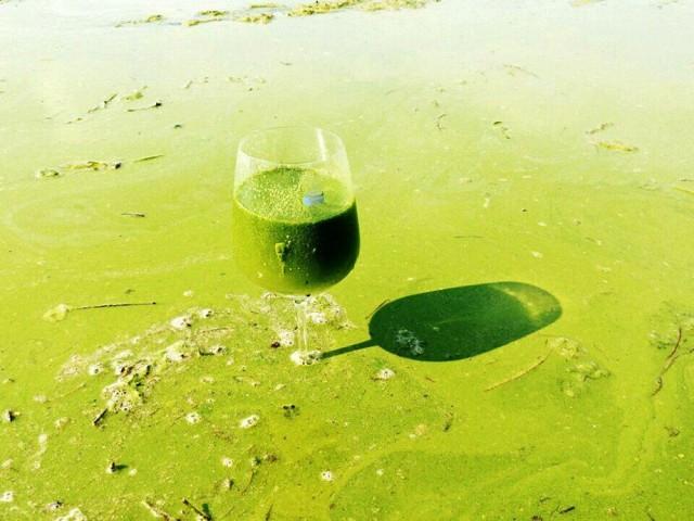 낙동강의 녹조라떼. 낙동강은 지금 녹조라떼 배양소.ⓒ 대구환경연합 정수근