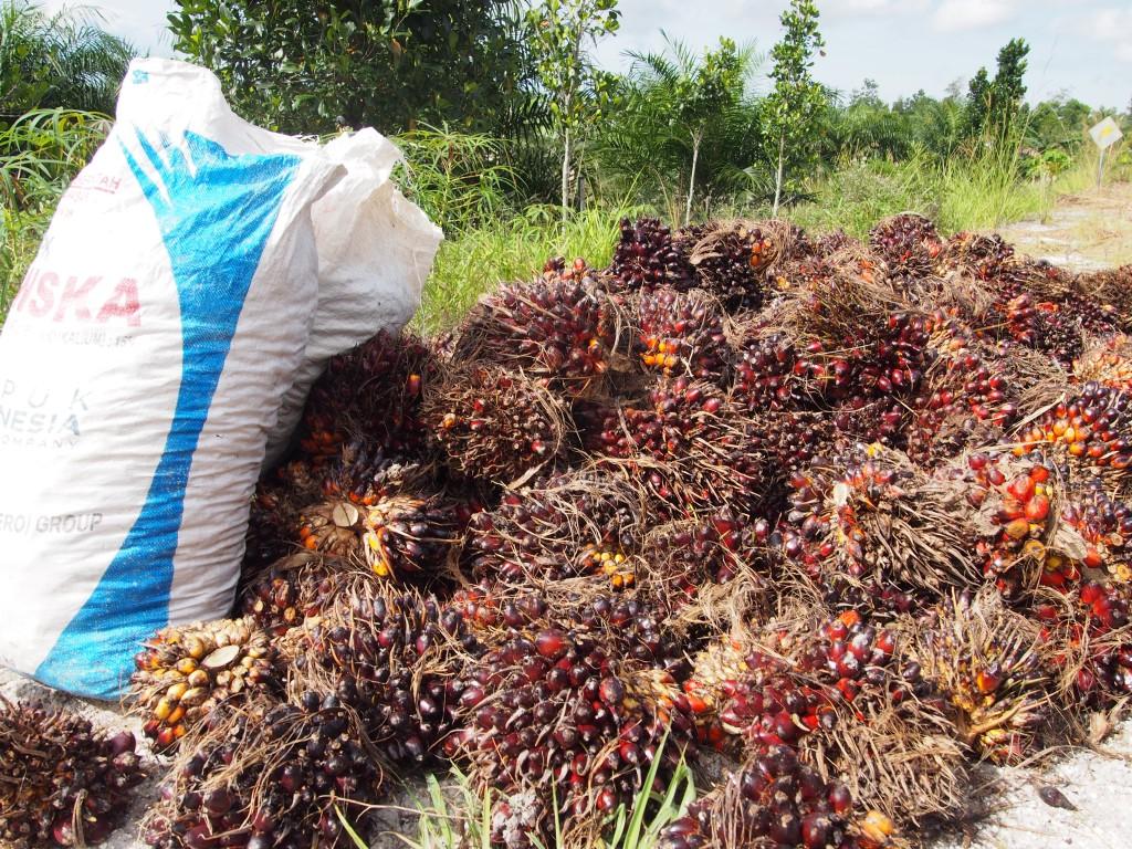 팜오일을 생산하는 야자수 씨앗은 도로주변에서도 구입할 수 있다.ⓒ홍선기