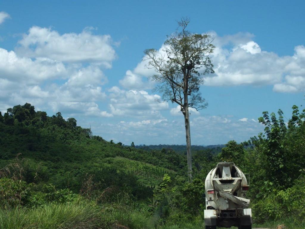 벌목 후 남은 수목. 열대원목은 보통 50m이상 성장한다. 벌목하면 몇 년이 걸릴 것인가? ⓒ홍선기