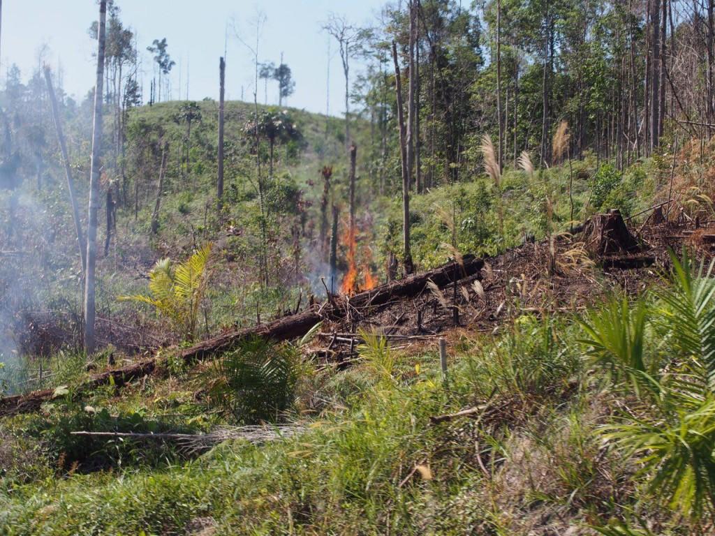 열대림에 인위적인 산불은 천연림 보호 법망을 피하는 지름길. 이후 벌목이 벌어진다.ⓒ홍선기