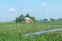 방글라데시에서만 볼 수 있는 독특한 생태계 '하올'