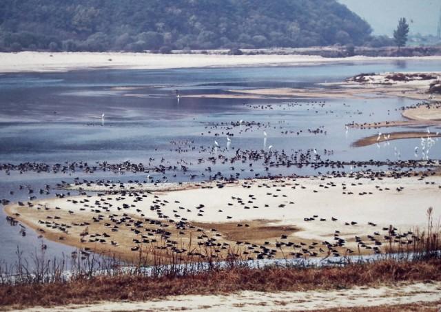 4대강사업 전의 철새도래지 해평습지의 평화로운 모습.ⓒ 정수근